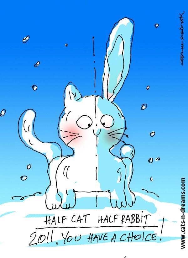 Открытки кроликом-котом, днем рождения